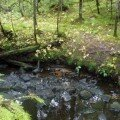 Поиски с металлоискателем в лесу